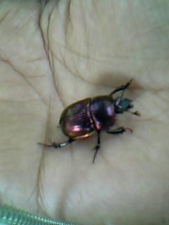 虫パターン